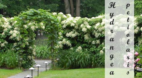 Klimplanten schaduw klimplanten - Pergola klimplant ...